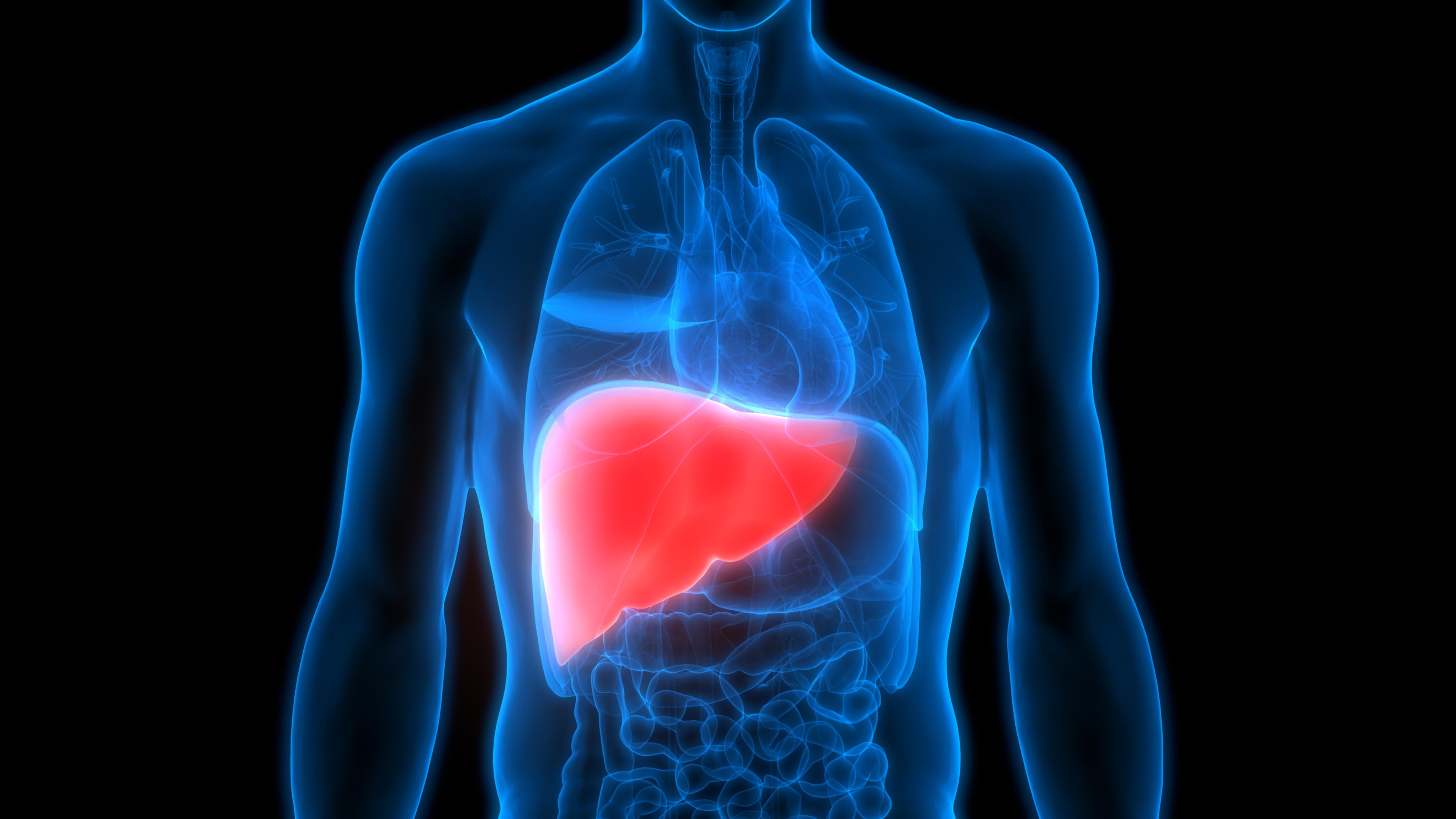 Human Body Organs Anatomy (Liver)