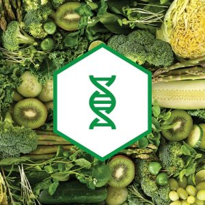 phytonutrient dna health
